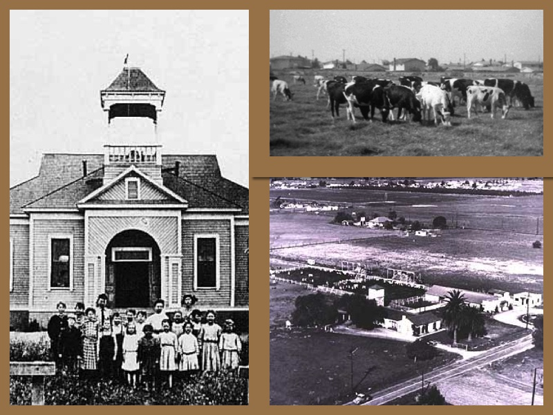 Early Cypress Dairy Farming